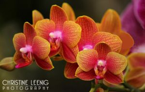 ORCHID_IMG_8032A.jpg
